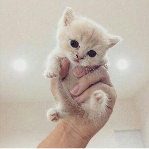 Un chaton pour Chaïma