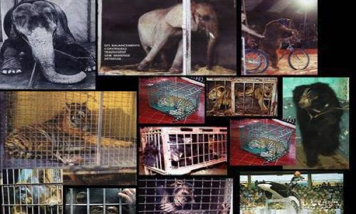 Les Ulis : Ne plus jamais accueillir de cirques avec animaux