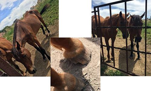 Amélioration des conditions des 2 chevaux de Noiseau