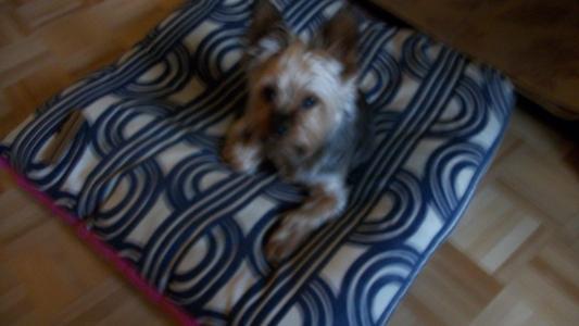 autoriser les personnes agés ou autre personnes a garder leur chien  quand le propriétaire ne veut pas vous louer de  logements