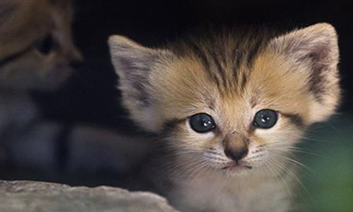 Sauvons les petits chatons et leur maman dans une école, ils sont en danger !