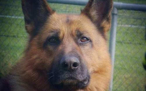 Pétition : Non à l'euthanasie du chien battu et affamé qui a tué sa maîtresse !