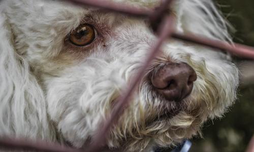 Lutte contre l'abandon des animaux