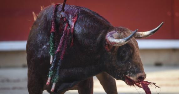 Torture, mutilation ou abandon envers les animaux