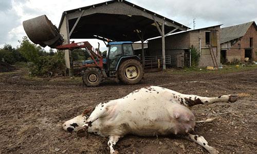 Pétition : Stop aux massacres injustifiés des animaux de la ferme !