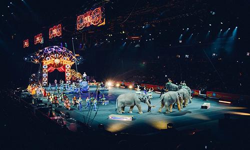 Pétition : Animaux dans les cirques, stop !