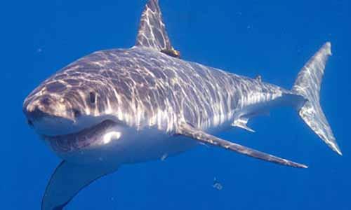 Non à l'aquarium à requins au Leclerc Baleone, oui aux écrans 3D