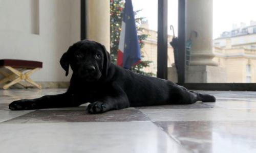 Pétition : Proposez un chien au Président pour l'Elysée !