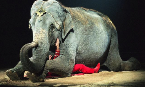 Pétition : Non à la présence d'animaux à Longuenesse générosité (cirque)