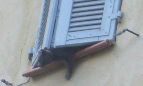 Il faut sauver 2 chats enfermés, abandonnés par leur maîtresse depuis 3 semaines à Mazaugues-Var !