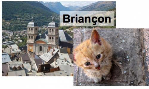 Pétition : Chats errants de Briançon, demandons au Maire de prendre ses responsabilités!