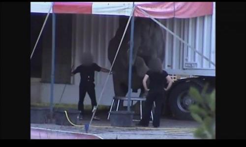 Les Services Vétérinaires doivent interdire la venue de la famille Folco et de ses éléphants en France.