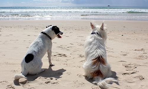 Pétition : Oui aux plages pour chiens : arrêt des interdictions massives de nos amis à 4 pattes en vacances !