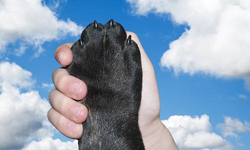 Pétition : Pour de meilleures conditions de vies pour les animaux