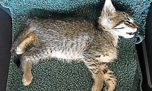 Que la vérité éclate  : qui a empoisonné plus de 400 chats à Saint-Pierre-la-Mer