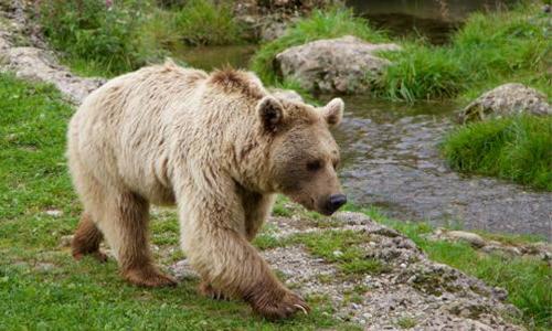 Aidons à la création du centre d'interprétation pour l'ours Logo !