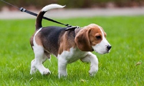 Non à l'arrêté obligeant la tenue en laisse des chiens sur la pelouse à Mongeron