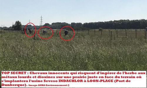 Pétition : Stop projet INDACHLOR #Dunkerque : Halte salades Dreal Hauts-de-France. SAUVONS chevaux de Loon-Plage des dioxines !