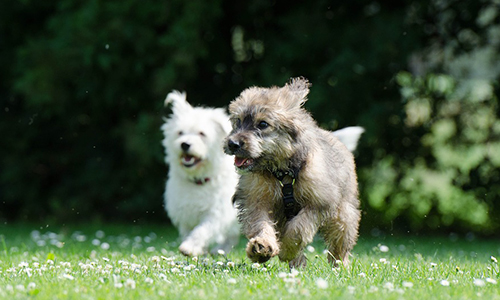 Pour avoir la garde des deux chiens que j'ai adopté en famille d'accueil