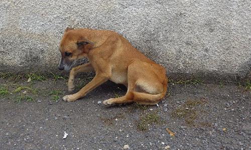 SOS urgence : chiens en danger !