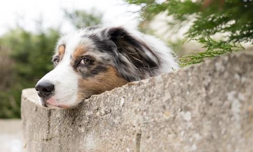 Abandon des animaux domestiques – Recensons les lâches !