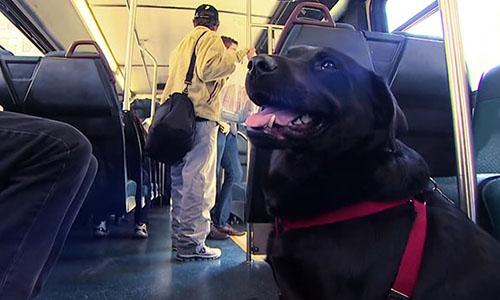 Pour que les chiens soient admis dans les bus et tramway à Nantes