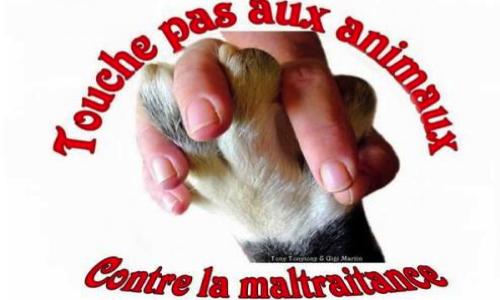 Contre la cruauté envers les animaux