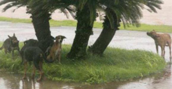 Non à l'abandon des animaux de compagnie pour évacuer St Martin et St Barth