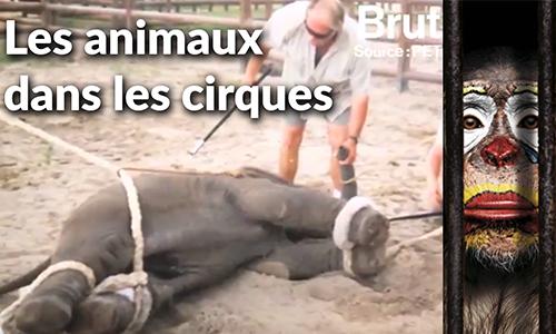 STOP A LA MALTRAITANCE ANIMALE DANS LES CIRQUES (France)