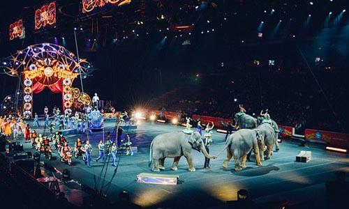 Contre les cirques avec animaux dans notre ville (Dieppe)