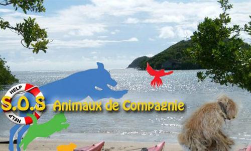 STOP aux trafics et à la maltraitance sur les animaux de compagnie en Martinique