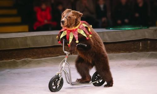 Interdisez les cirques avec animaux