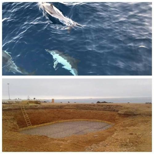 Non à la création du delphinarium d'Agadir