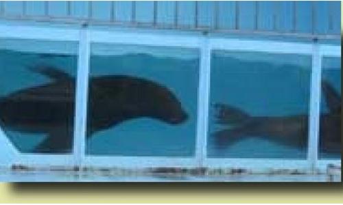 Non à l'exploitation animale et la venue de Aquatic Shark à NEVERS