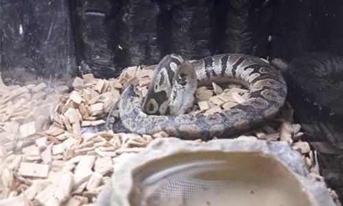 Pétition : Pour l'arrêt de la vente de reptiles à Gamm Vert de Beauvais