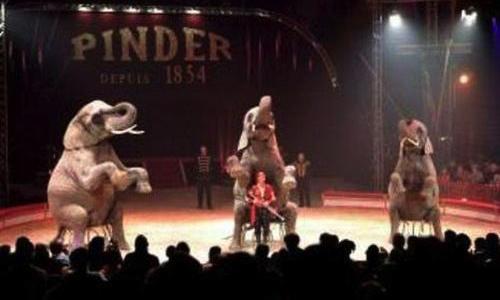 Vive les cirques sans animaux à Chartres