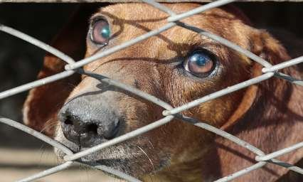 Mise en place d'un grand plan national de moralisation de la cause animale