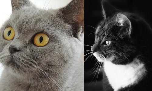 Deux chats morts mystérieusement à Bussy les Daours ! Arrêtons le massacre !