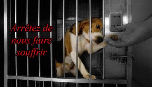 NON aux experiences sur les animaux  - Page 2 Petition-img-35116-fr