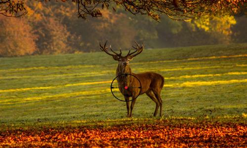 Oui à l'abolition de la chasse et la cynégétique