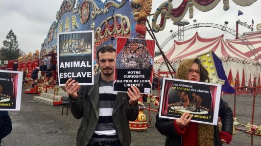 Avalanche de courrier pour réveiller Nicolas Hulot #LibertePourMaya