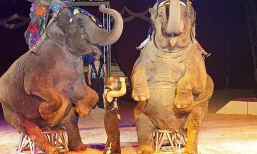 Pétition : Cannes:  stop aux cirques avec animaux