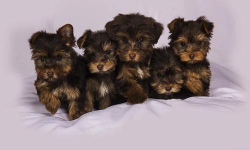 Pétition : Supprimez la garantie légale de conformité applicable aux ventes de chiens et de chats !