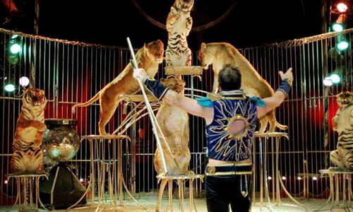 Le cirque de Venise de nouveau à Sète : empêchons-le !