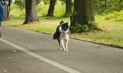 Pour la création d'un parc canin dans le parc municipal de l'île des impressionnistes