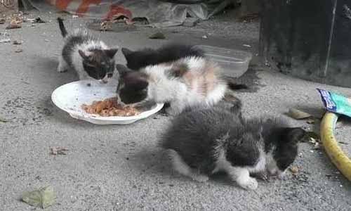 Le maire de Graulhet (Tarn) refuse de signer la convention avec 30 millions d'amis pour la stérilisation des chats errants