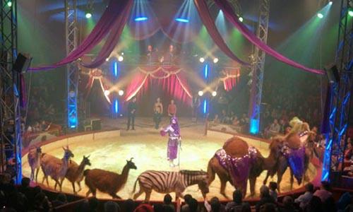 Non au Cirque Bormann à Paris ou ailleurs - Non à l'exploitation des animaux sauvages - Rien de divertissant !