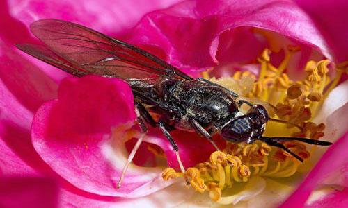 Pétition : Halte à l'utilisation intensive de larves de la mouche, Hermetia illucens ! Exigeons plus de communication d'ADEME PACA pour le projet CertiFLY !