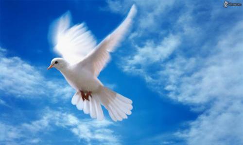 Interdiction des lâchers de colombes et de pigeons