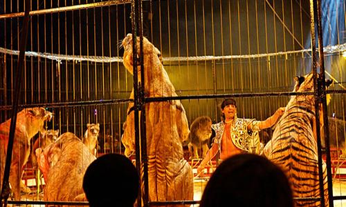 Pour l'interdiction des cirques exploitant des animaux